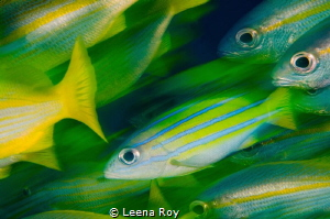 Fish action by Leena Roy